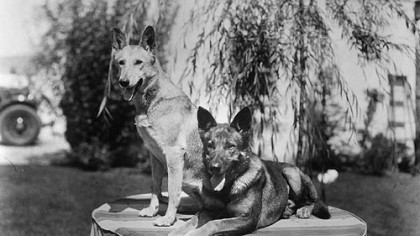 Rin Tin Tin, right, and his litter mate Nanette at a U.S. Army base in France shortly after Lee Duncan rescued them.