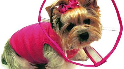 Pet Tales: See Cones soften post-op recovery