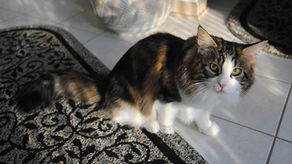 Pet Tales: Sid the Kid (the cat) is back