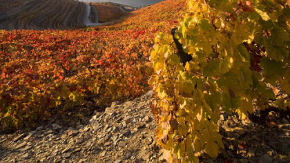 View of the Douro River and vineyards in Portugal's Douro Valley wine country in the fall.