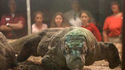Noname, the Pittsburgh Zoo and PPG Aquarium's Komodo dragon, in 2004.