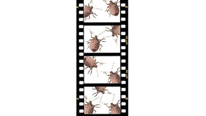 The reviled stink bug is the subject of this year&#039;s Film Kitchen Contest Show.
