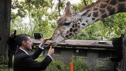 Terrance Krysinski has a carrot for Mel, a 5-year-old Masi giraffe.
