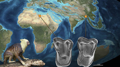 An illustration showing the relationship between archeological finds in Africa and recently, Myanmar. Nearly indentical teeth belived to be from related species were found in Africa and Asia, supporting a theory that early human ancestors migrated from Asia to Africa.