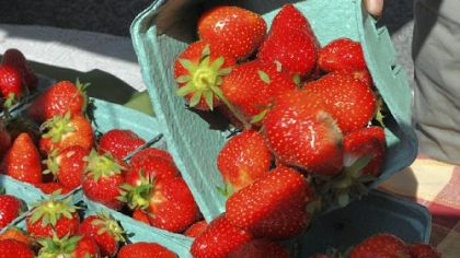 Strawberries at the June 7th farmers market in Market Square.