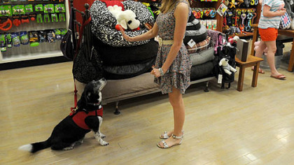 Moochie & Co. store manager Nancy Goebel gives command to her 9-year-old border collie mix, Romeo, at the Mall of Robinson.