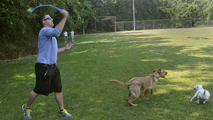 Tom Zwergel plays with Crosby, a 2.5-year-old lab-hound mix, and Aspen, right, a 2.5-year-old female Jack Russell terrier at Olympia Park on Mount Washington today. Mr. Zwergel is a supporter of the dog park.