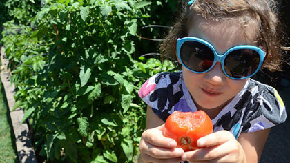 Ava Hogan enjoys an early tomato from her grandfather's garden.
