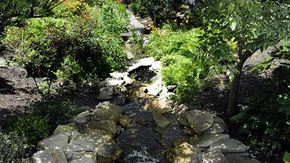 Water flows down the hillside into a Koi pond.