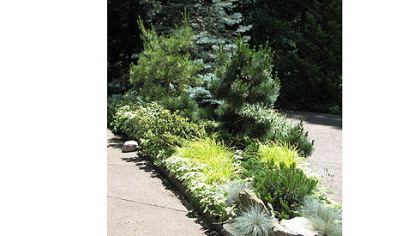 Evergreens and perennials create a pleasing combination at Alan London's home.