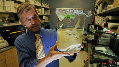 Stephen Badylak, deputy director of UPMC's McGowan Institute for Regenerative Medicine holds a pig heart. The University of Pittsburgh and UPMC is doing research on pig livers that could be used to re-create replacement human livers.