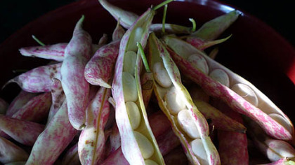 Shelly beans -- cranberry beans -- from the Mt. Lebanon Lions Farmers Market.